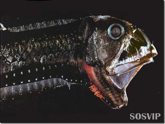 Peixes estranhos esqusitos.jpg (2)
