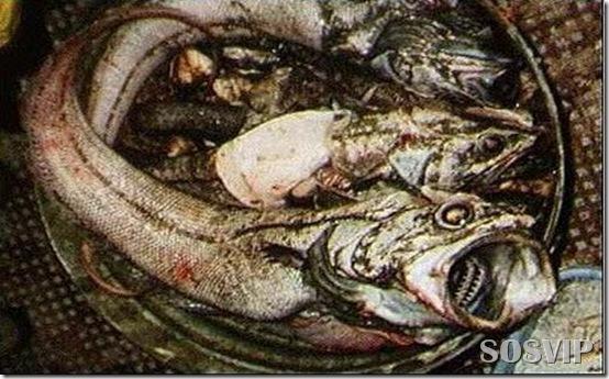Peixes estranhos esqusitos.jpg (19)