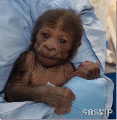 Animals baby - Bebes animais.jpg (33)