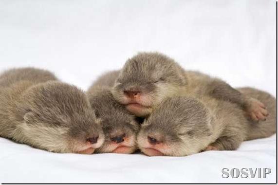 Animals baby - Bebes animais.jpg (11)