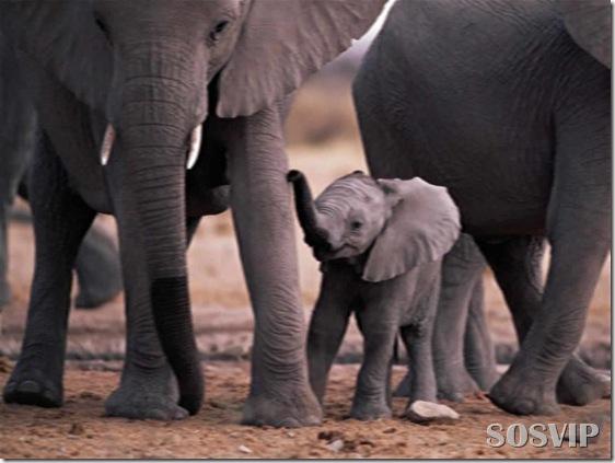 Animals baby - Bebes animais.jpg (35)
