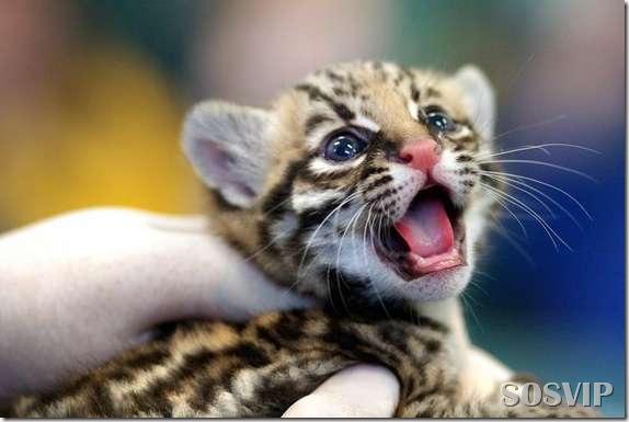 Animals baby - Bebes animais.jpg (9)
