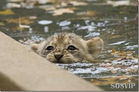 Animals baby - Bebes animais.jpg (6)
