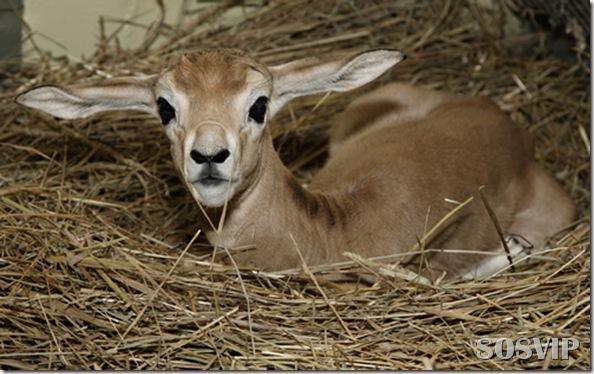 Animals baby - Bebes animais.jpg (22)