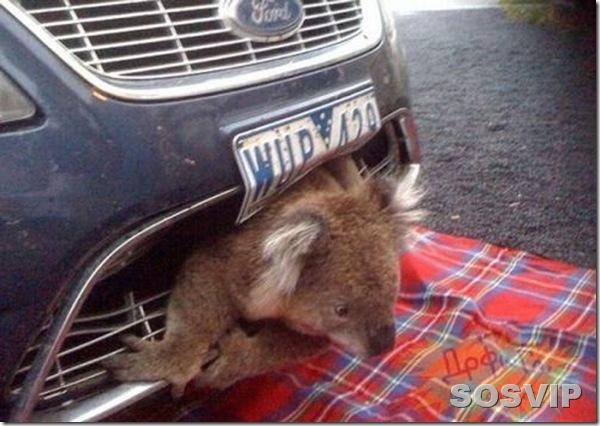 funny animals engracados animais.jpg (3)