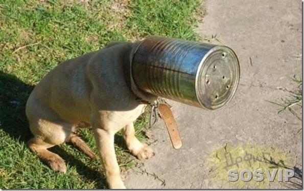 funny animals engracados animais.jpg (4)