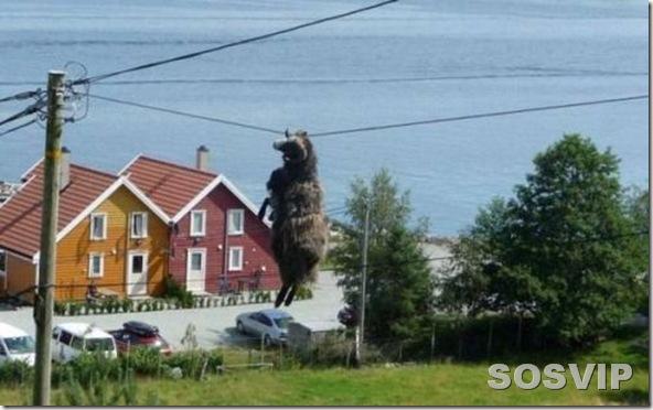 funny animals engracados animais.jpg (7)