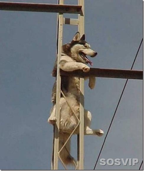 funny animals engracados animais.jpg (9)