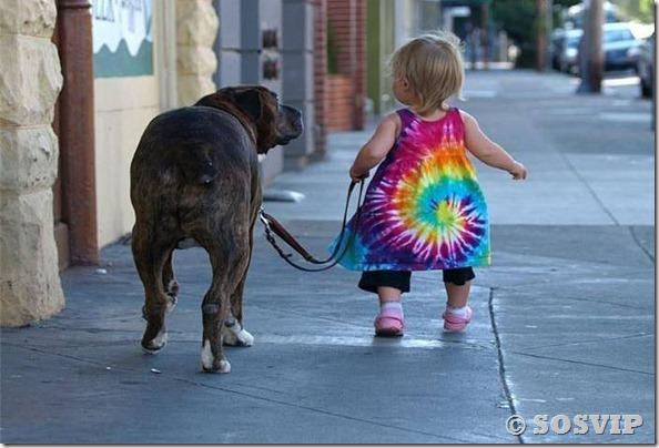 Cachorro babá a melhor babá babysitter (9)