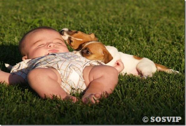 Cachorro babá a melhor babá babysitter (5)