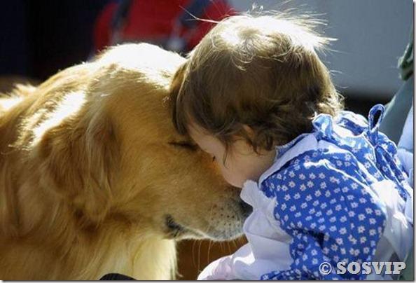 Cachorro babá a melhor babá babysitter (12)