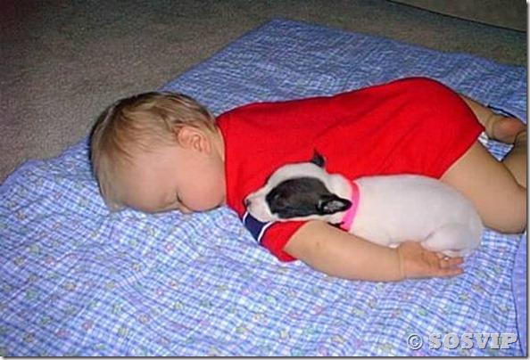 Cachorro babá a melhor babá babysitter (14)