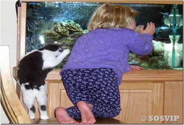 Cachorro babá a melhor babá babysitter (15)