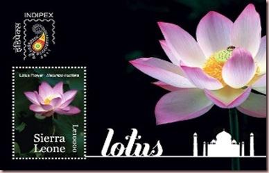 lotus siera leone1
