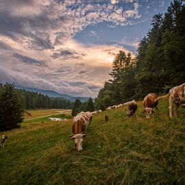 by Stanislav Horacek - Landscapes Prairies, Meadows & Fields
