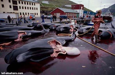 卡德龍海豚被開腸剖肚的慘狀