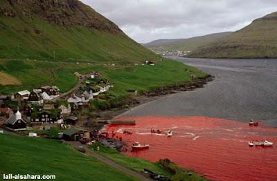 被血染紅的海洋