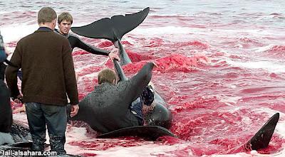 丹麥斐羅島的冷血殺戮