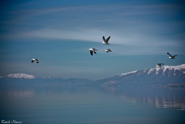 Birds -Antelope Island wallpaper pictures
