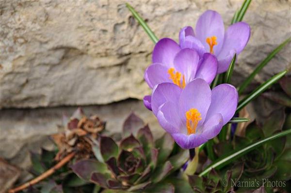 Spring in my garden 1