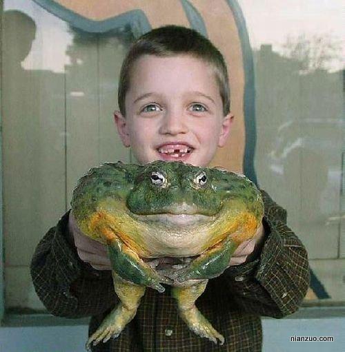 孩子捣蛋 大青蛙,巨蛙