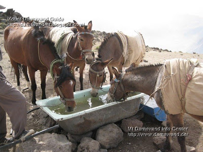Mt Damavand Base Camp Mules