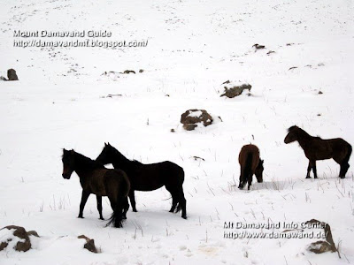 Wild life in Mt Damavand Winter, Polour Road to Damavand, Photo by Ardeshir Soltani