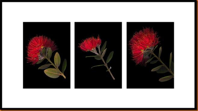 pohutukawa-triptych-600