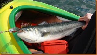 kayakdownundernzleg1-03046
