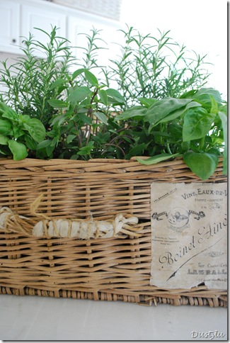 Herbs 031