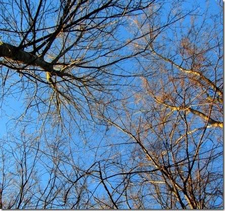 trees in praise