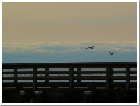 Birds flying over bridge