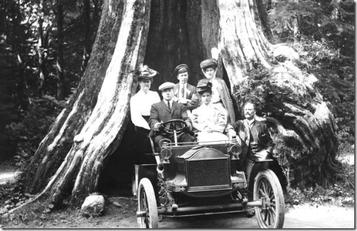 Old Tree Stanley Park Circa 1910-1918