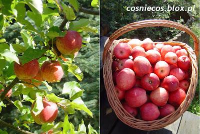 Wspomnienia z jabłkobrania