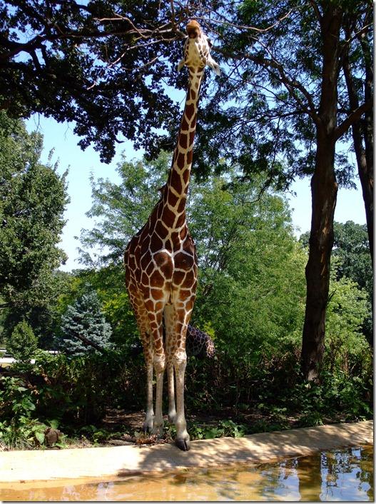 Zoo 059