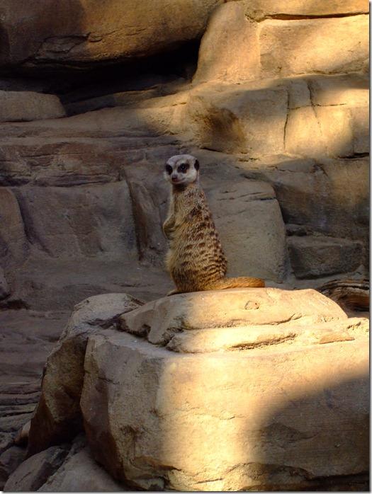 Zoo 206