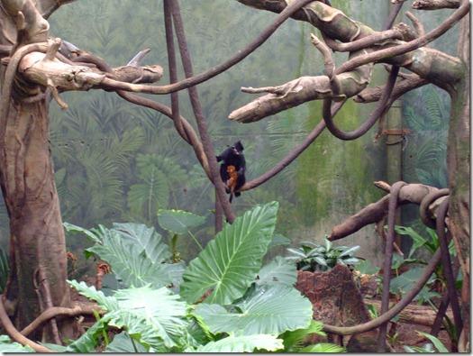Zoo 156