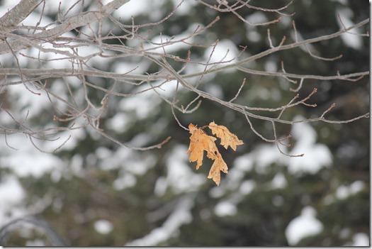 Winter 086
