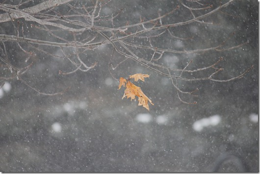 Winter 181