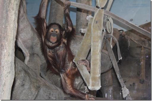 Zoo 727