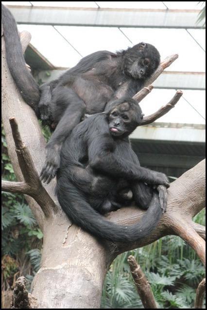 Zoo3-336_thumb
