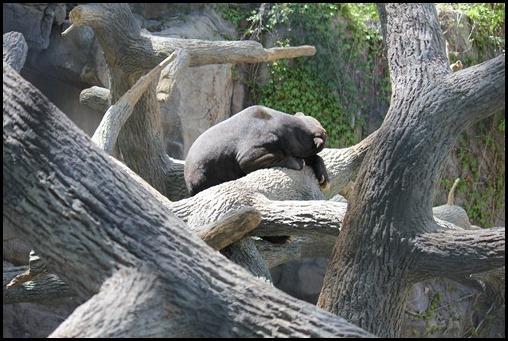 Zoo3-392_thumb