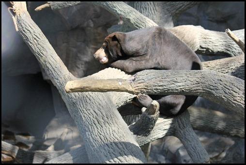 Zoo3-393_thumb
