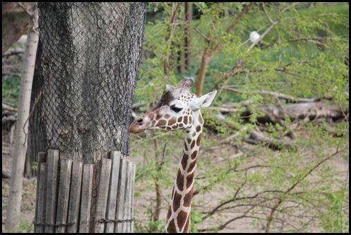 Zoo3-666_thumb_thumb_thumb