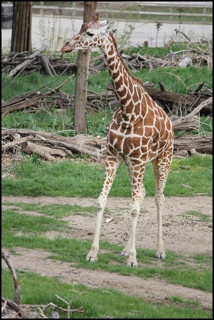 Zoo3-676_thumb_thumb_thumb