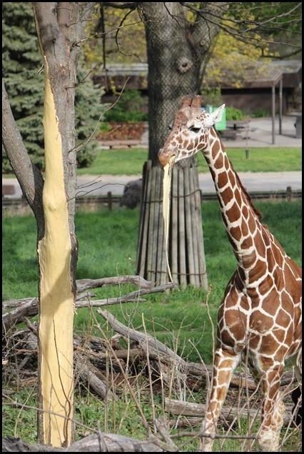 Zoo3-694_thumb_thumb_thumb