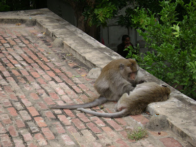 Monkeys at Wat Phnom