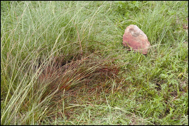 Giesseke, Dr Ernest murder Bloodied grass and rock with which he was bludgeoned Jan 232010