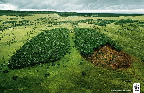 保护地球的肺