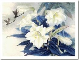 цветы с синими листьями